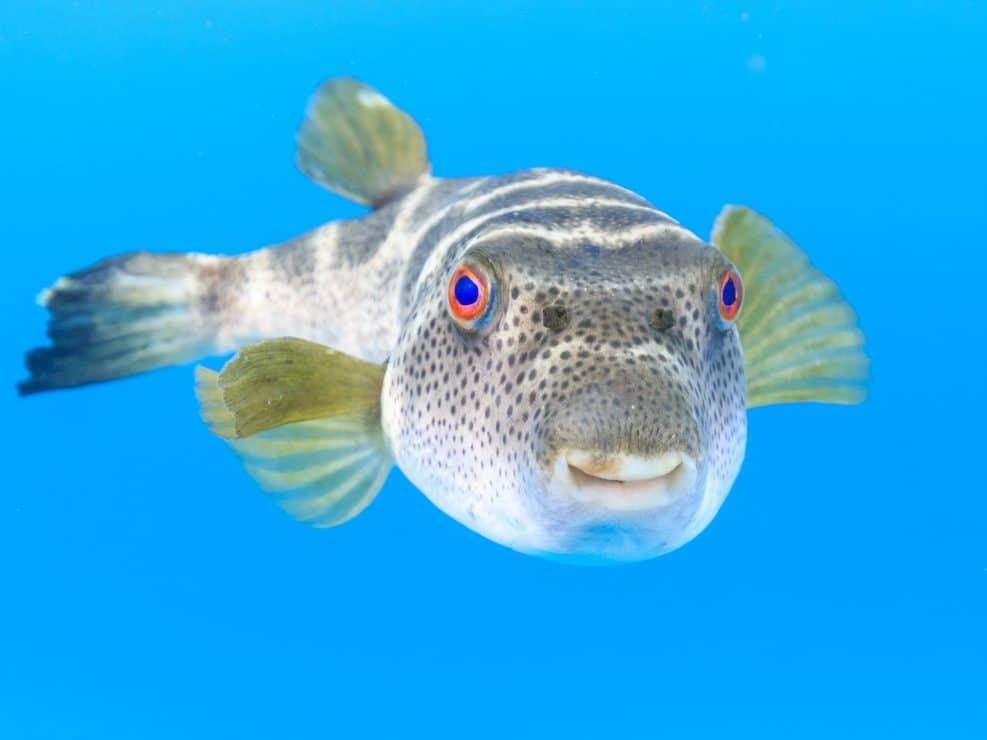 Galapagos Underwater